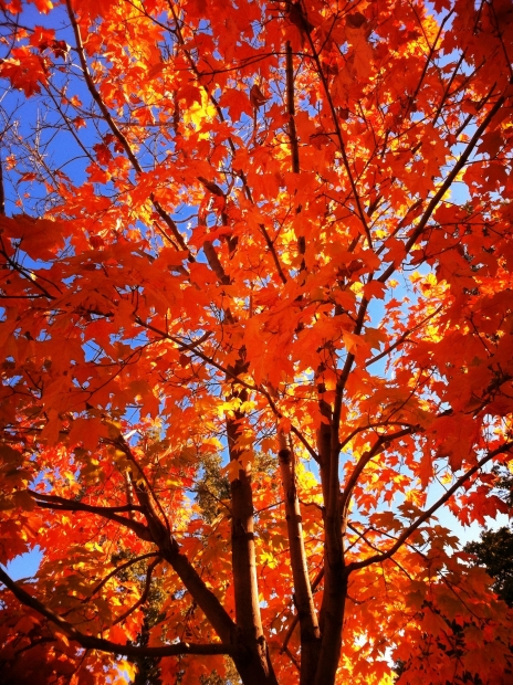 Fall Tree Care Tips For Healthy Trees Year Round